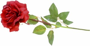 My Love Is Like A Red Red Rose Literature English